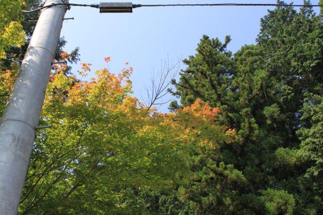 葉っぱの色が暖色に変わっています。 秋ちかみかも?いいえ、まだでしょう。