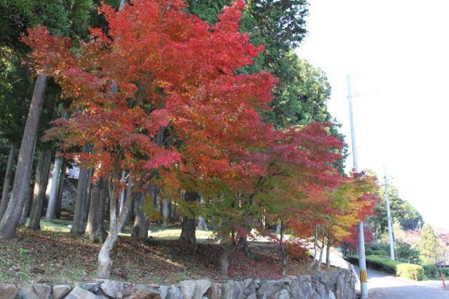 若宮の杜のわき腹あたり。 紅葉がきれいに色づいています。